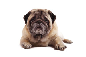 chisholm-trail-veterinary-clinic-love-my-pet-wellness-plans-senior-dog-healthcare
